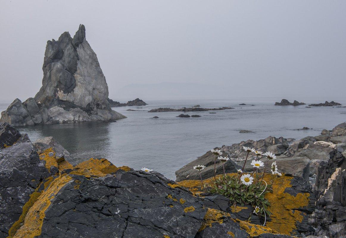 Шантарские острова природа