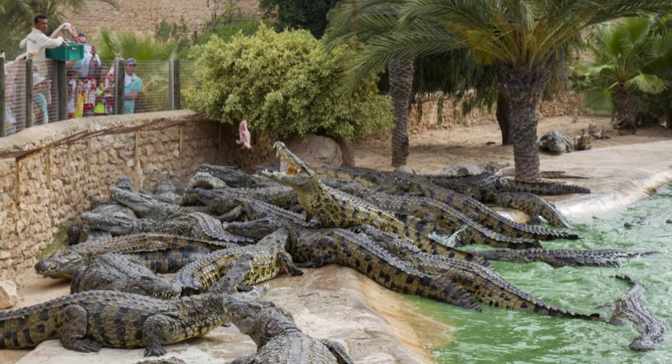 Крокодиловая ферма Джерба
